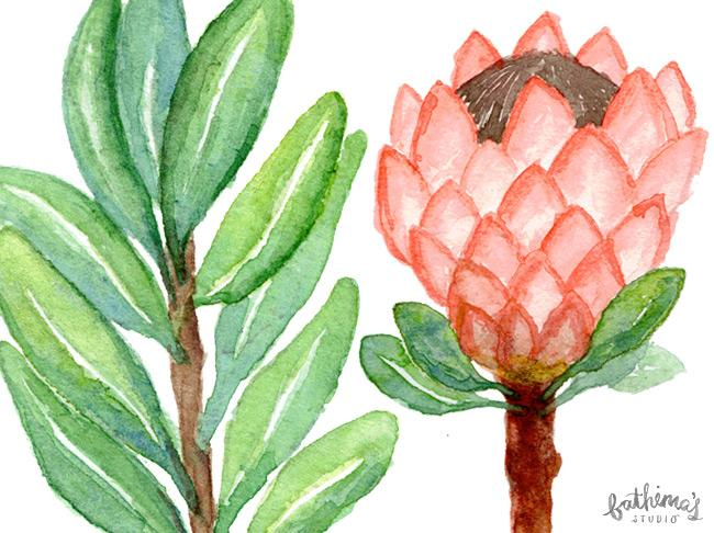 Watercolour Protea Botanical Illustrations
