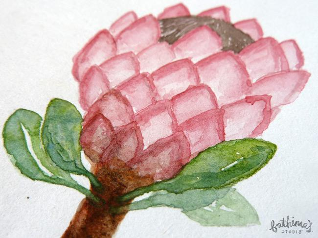 Watercolour Protea botanical illustration