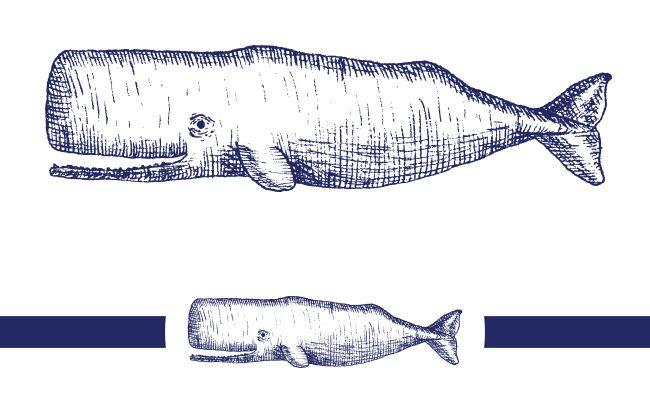 nautical typographic wedding stationery - hand drawn whale illustration